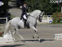 picture of Dressage Horse Collection CDI 3*