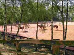 photo de Centre Equestre les Roches de Scoeux